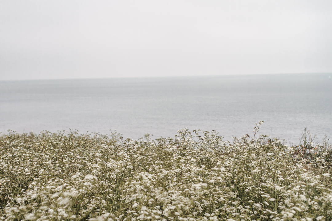 british nature