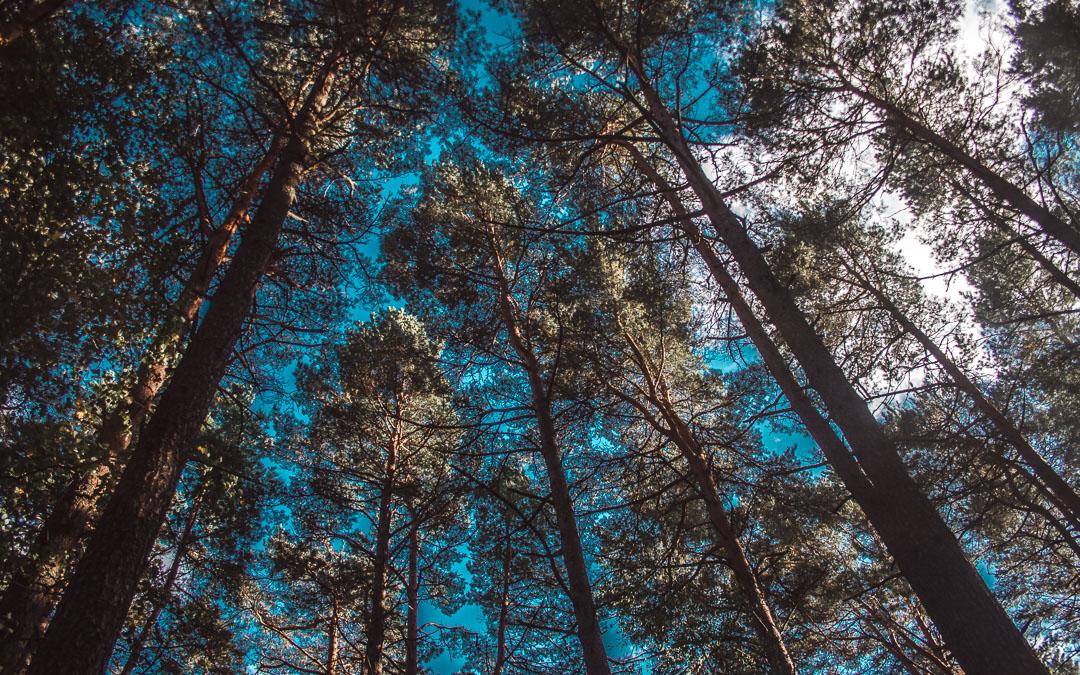 latvia saulkrasti forest
