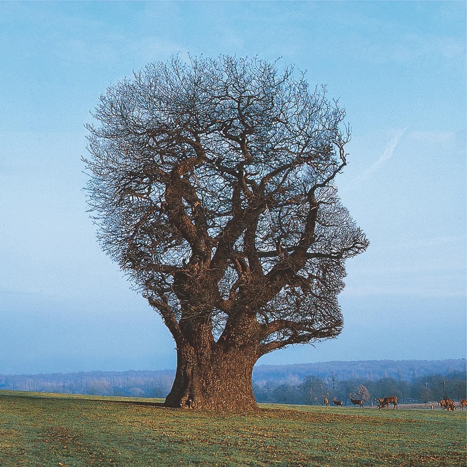 mindfulness noosphere meditate telepathy